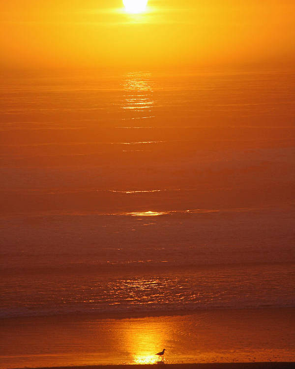 Sunset Poster featuring the photograph Sun Set Beach by Alice Eckmann