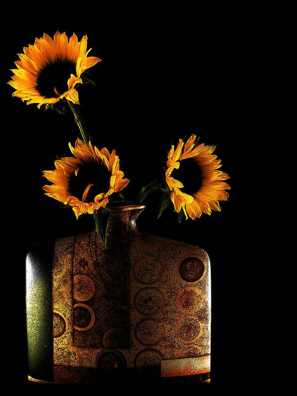 Sunflower Poster featuring the photograph Sunflower Galore by Lucian Badea