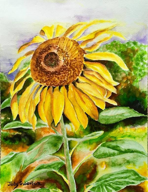 Sunflower. Yellow Poster featuring the painting Sunflower by Judy Swerlick