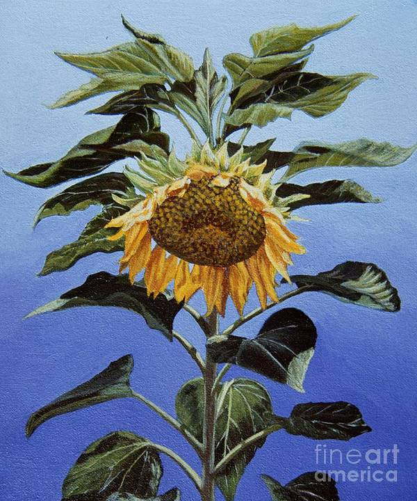 Sunflower Painting Poster featuring the painting Sunflower Nodding by Jiji Lee