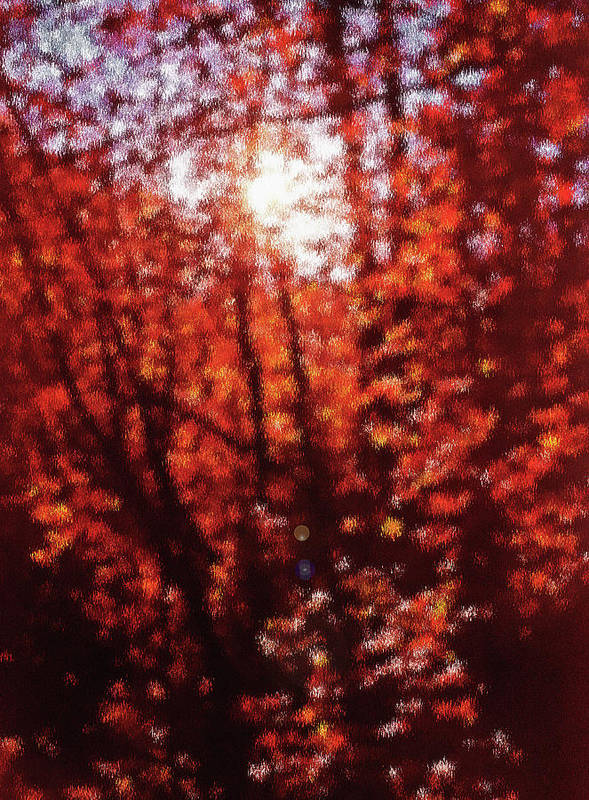 Fall Poster featuring the photograph Sunlight Thru Autumn Leaves Abstract by Steve Ohlsen