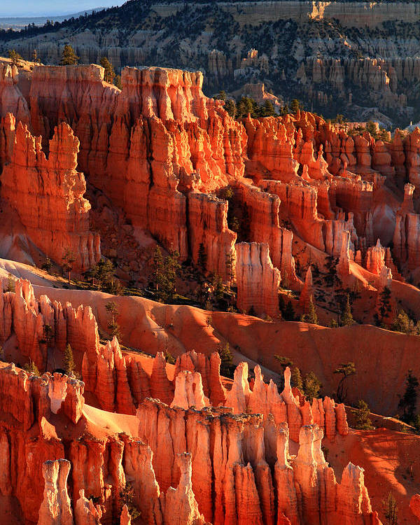 Bryce Poster featuring the photograph Sunrise On The Hoodoos Of Bryce Canyon National Park by Pierre Leclerc Photography