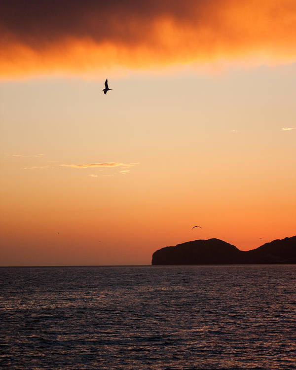 Beach Poster featuring the photograph Sunset Over Sea Of Cortez by Dina Calvarese