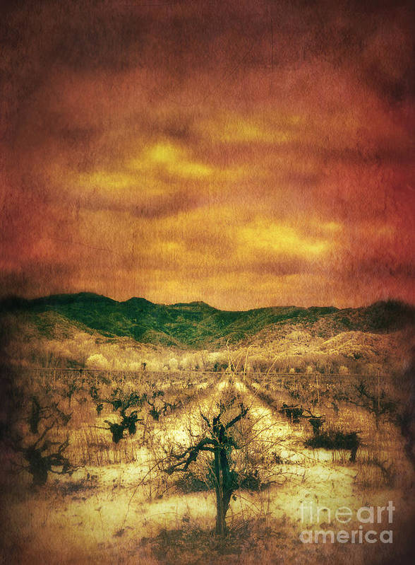 Vineyard In Winter Poster featuring the photograph Sunset Over Vineyard by Jill Battaglia
