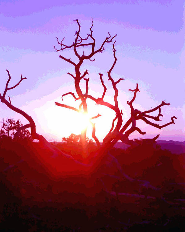 Desert Poster featuring the photograph Sunset Through Silhouetted Tree In Desert 2 by Steve Ohlsen