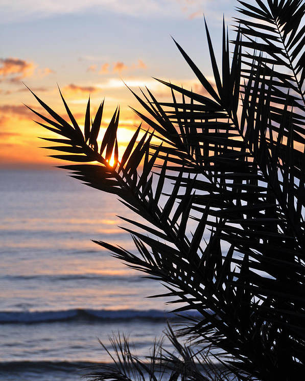 Swamis Palm Beach Photograph Landscape Sunset Palm Tree Encinitas San Diego California Coast Silhouette Poster featuring the photograph Swamis Palm by Kelly Wade