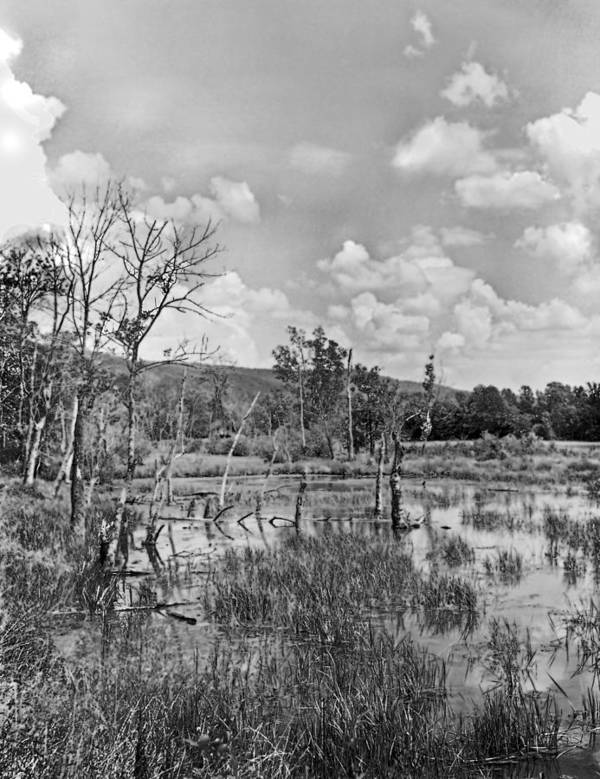 Ansel Adams Poster featuring the photograph Swamp by Curtis J Neeley Jr