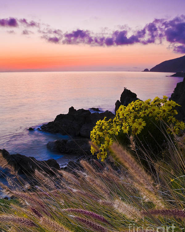 Beaches Poster featuring the photograph Sycamore Cove After Sunset by Greg Clure