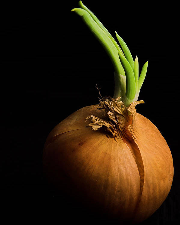 Onion Poster featuring the photograph Tasty Onion by Thomas Splietker