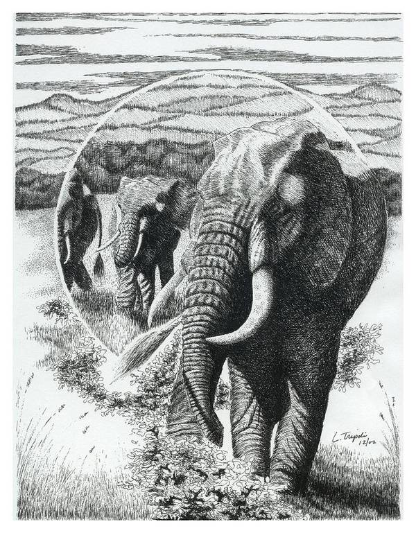 Wildlife Poster featuring the drawing Telephoto by Lawrence Tripoli
