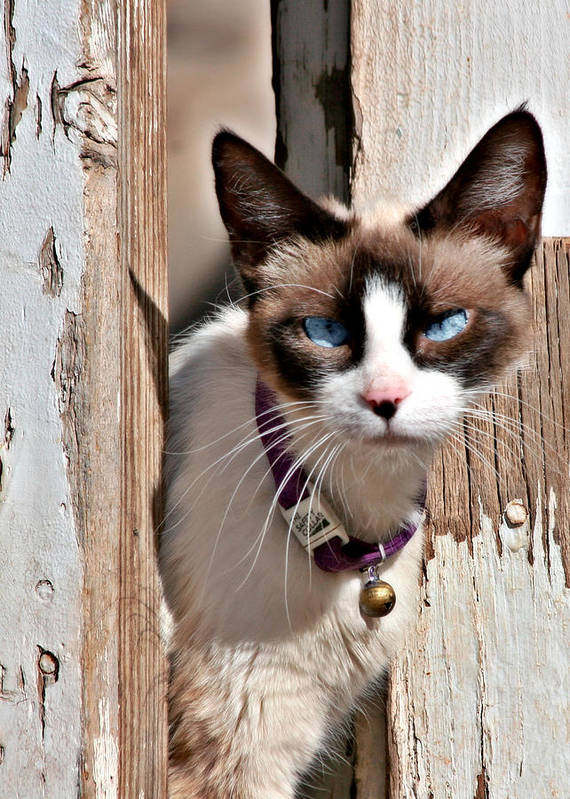 Pet Portrait Poster featuring the photograph The Cat A Purrfect Carnivore by Christine Till