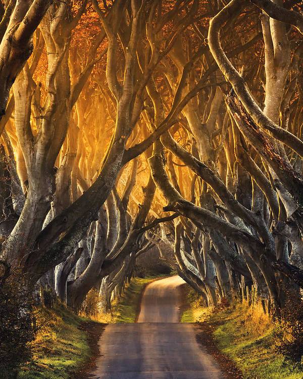 Take A View Poster featuring the photograph The Dark Hedges IIi by Pawel Klarecki