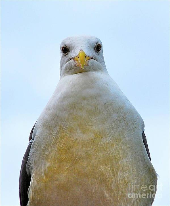 Seagull Poster featuring the photograph The Disapproving Seagull by Lori Leigh