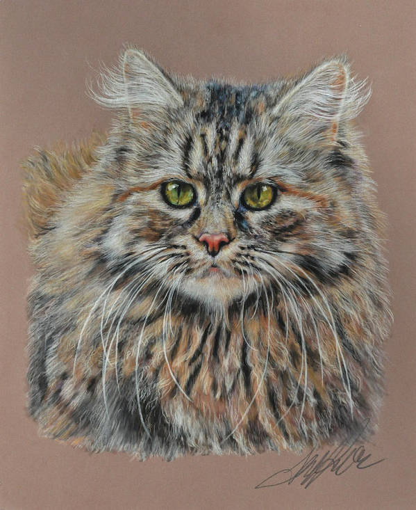 Cat Poster featuring the pastel The Fluffy Feline by Terry Kirkland Cook