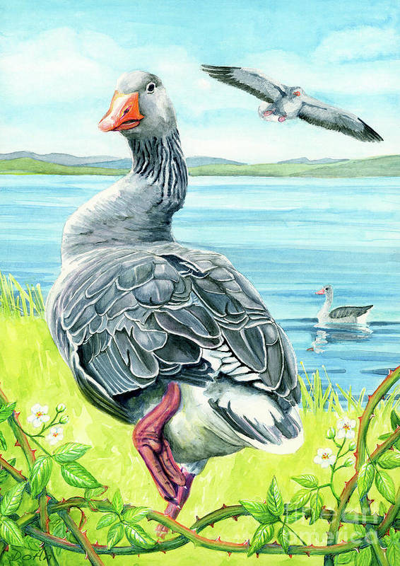 Celts Poster featuring the painting The Goose by Antony Galbraith
