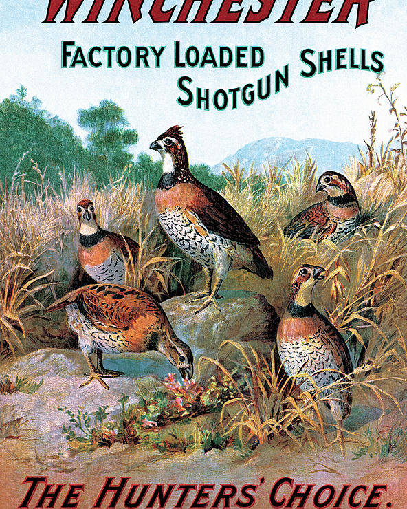 Quail Poster featuring the painting The Hunters Choice by Unknown