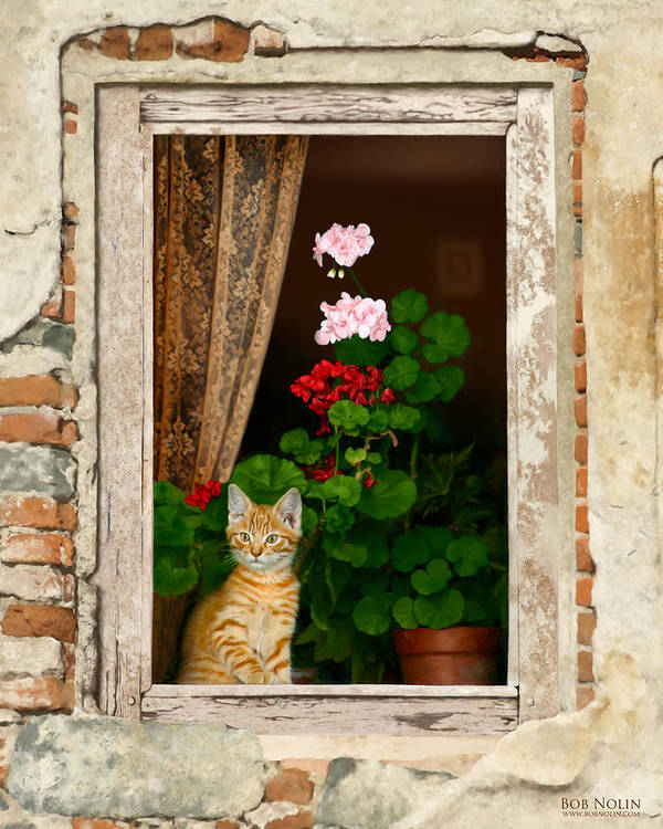 Kitten Poster featuring the digital art The Little Tuscan Tiger by Bob Nolin
