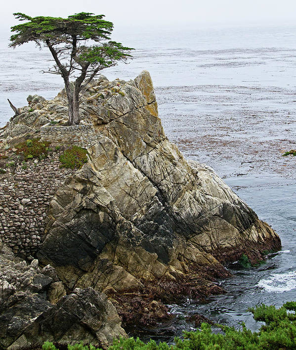 Lone Poster featuring the photograph The Lone Cypress - California by Brendan Reals