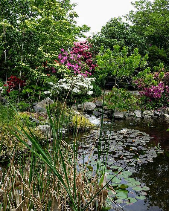 Botanical Flower's Nature Poster featuring the photograph The peaceful place 12 by Valerie Josi