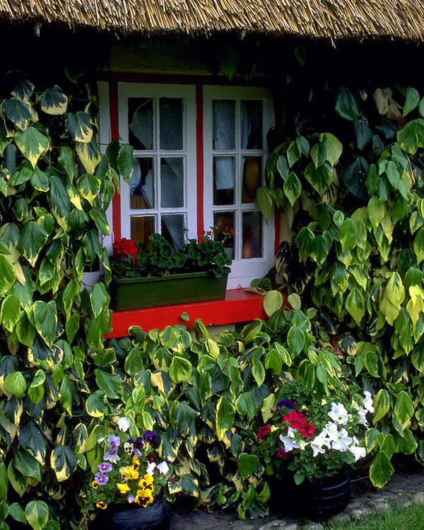Ivy Poster featuring the photograph The Perfect Cottage by Carl Purcell