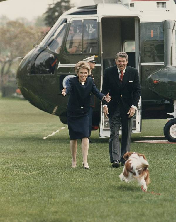 History Poster featuring the photograph The Reagans Being Greeted By Their Dog by Everett