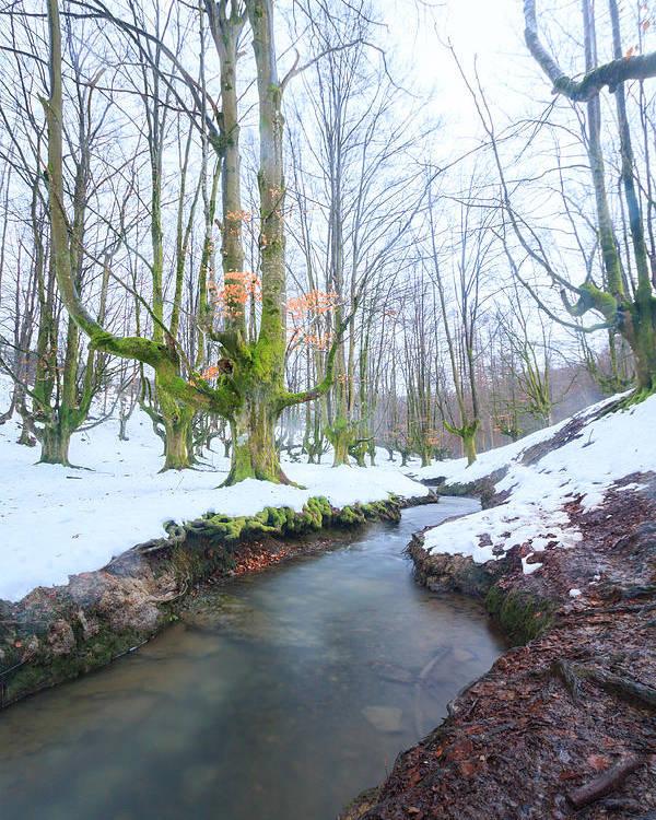 Otzarreta Poster featuring the photograph The River In The Otzarreta Forest With Snow by Carlos Aragon