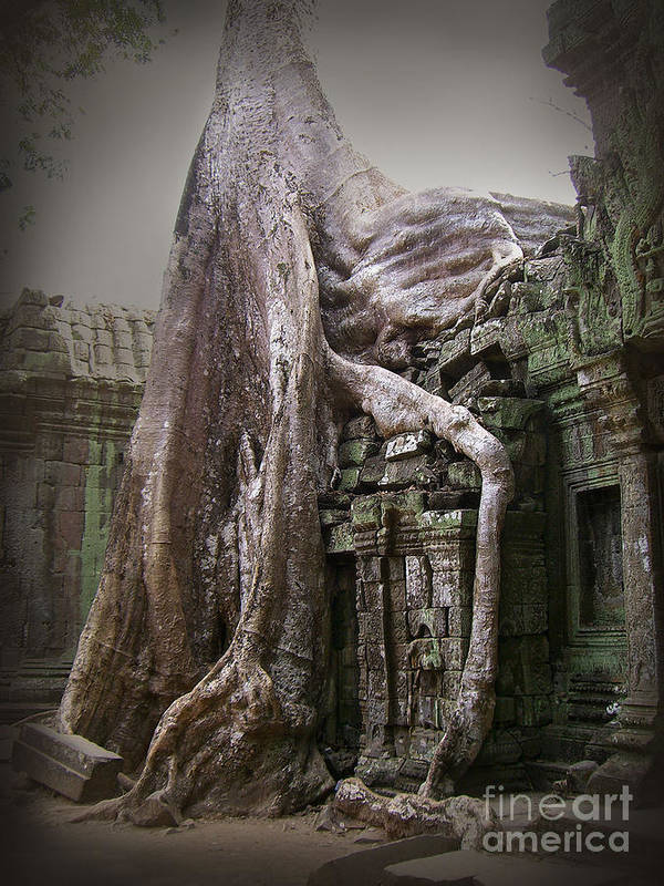 Tree Roots Poster featuring the photograph The Secrets Of Angkor by Eena Bo