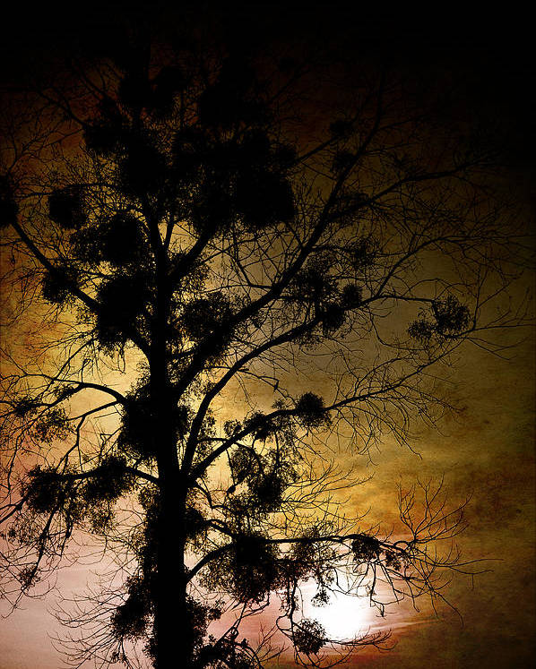 Loriental Poster featuring the photograph The Sunset Tree by Loriental Photography