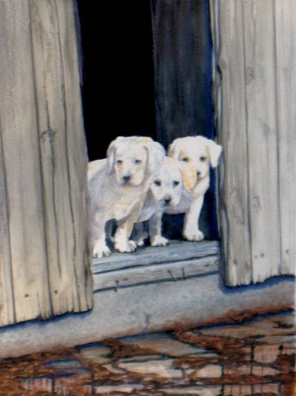 Yellow Labs Poster featuring the painting The Three Mucketeers by Haldy Gifford