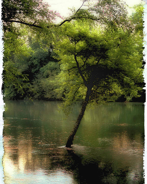 Tree Poster featuring the photograph The Tree Island by Ken Gimmi