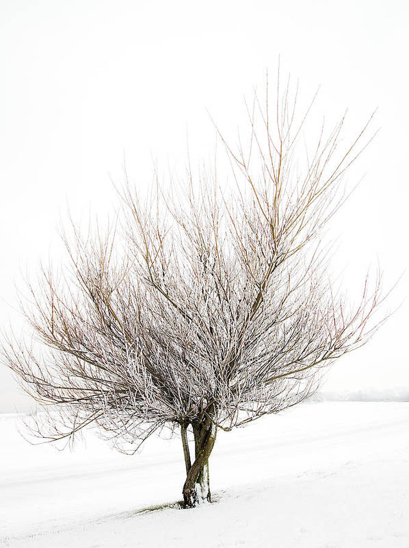 Tree Poster featuring the photograph The Tree by Svetlana Sewell