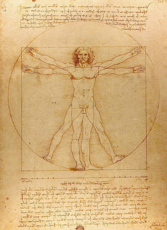 Leonardo Poster featuring the drawing The Vitruvian Man by