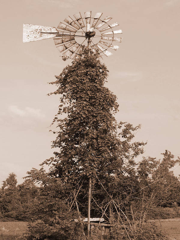 Trees Poster featuring the digital art The Windmill by Audrey Venute