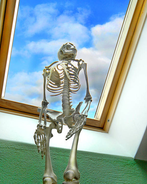 Skeleton Poster featuring the photograph The Window by Robert Lacy