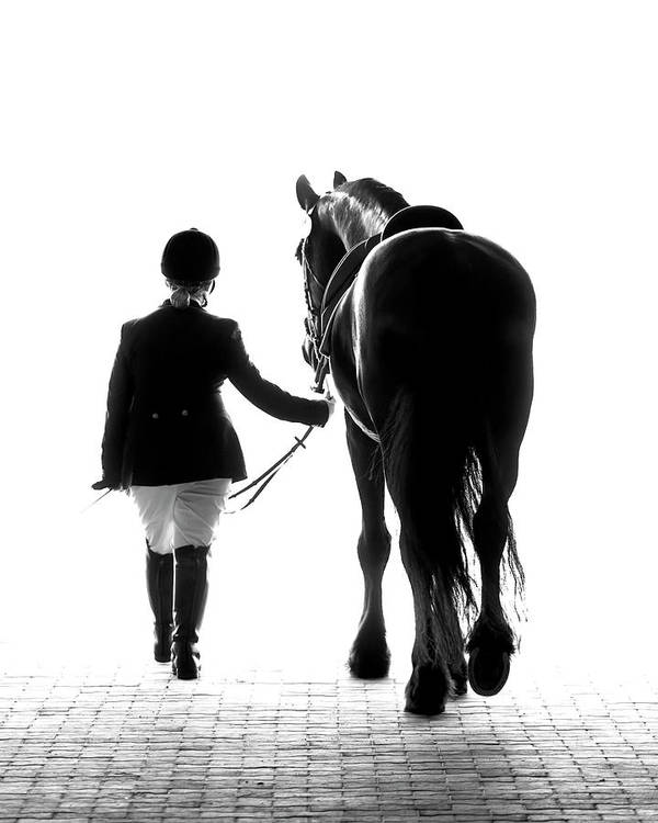Horse Poster featuring the photograph Their Future Looks Bright by Ron McGinnis