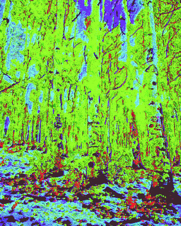 Poster featuring the digital art Thin Trees D4 by Modified Image