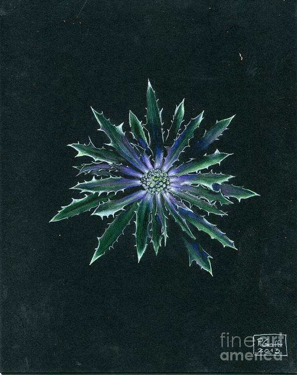 Thistle Poster featuring the painting Thistle by Penrith Goff