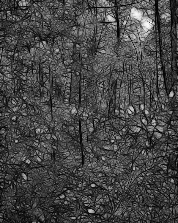 Thoreau Poster featuring the photograph Thoreau Woods Black And White by Lawrence Christopher