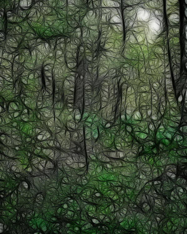 Thoreau Poster featuring the photograph Thoreau Woods Fractal by Lawrence Christopher