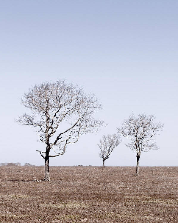 Trees Poster featuring the photograph Three Trees - Nantucket by Henry Krauzyk