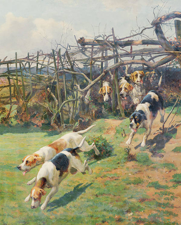 Race; Beagle Poster featuring the painting Through The Fence by Arthur Charles Dodd