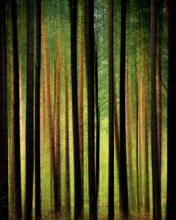 Forest Poster featuring the photograph Through The Woods by Svetlana Sewell