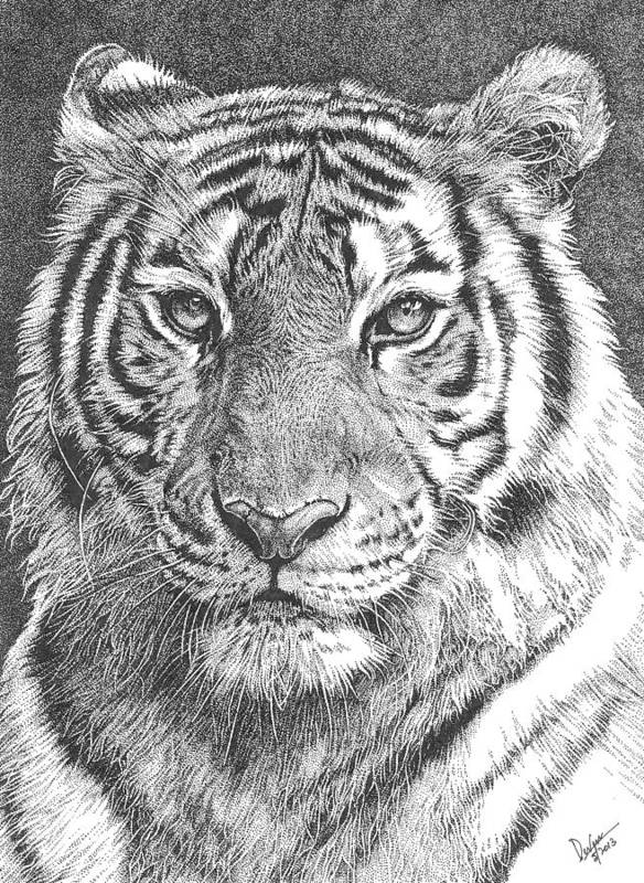 Tiger Poster featuring the drawing Tiger by Deven Singh Kshetrimayum