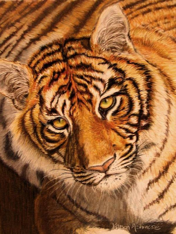 Tiger Poster featuring the drawing Tiger by Karen Ilari