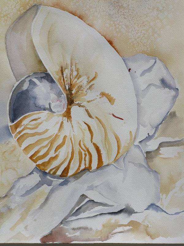 Still Life Poster featuring the painting Tiger Nautilus by Kathy Mitchell