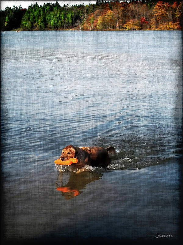 Dog Poster featuring the digital art Time To Fetch by Joan Minchak