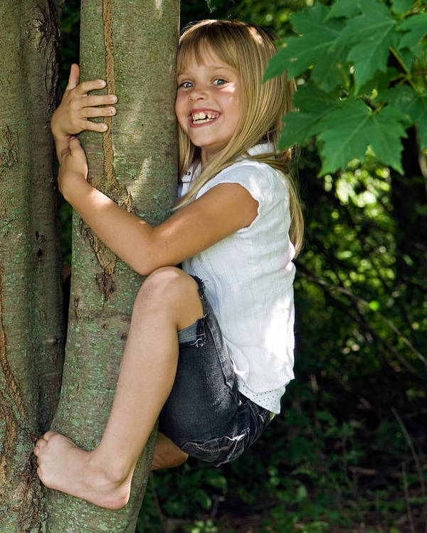 Tree Poster featuring the photograph Tom Boy by Maria Dryfhout