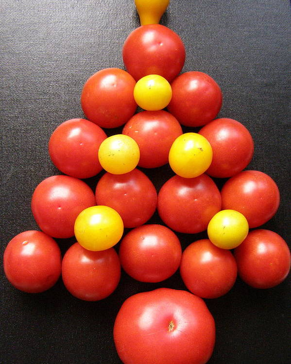 Tomatoes Poster featuring the photograph Tomatoe Tree by Jeanette Oberholtzer