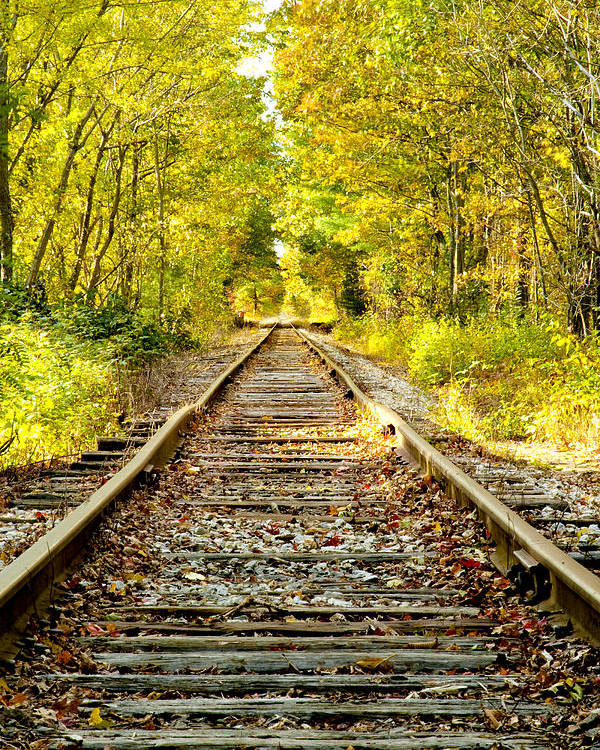 Foliage Poster featuring the photograph Track To Nowhere by Greg Fortier