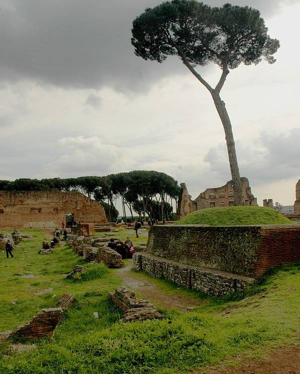Tree Poster featuring the photograph Tree In Ancient Rome Landscape by Joseph Cossolini